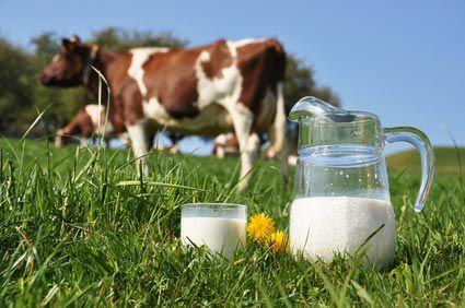 l 39 homme doit il absolument consommer du lait de vache quelles alternatives les. Black Bedroom Furniture Sets. Home Design Ideas